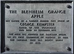 The Blenheim Orange Apple plaque